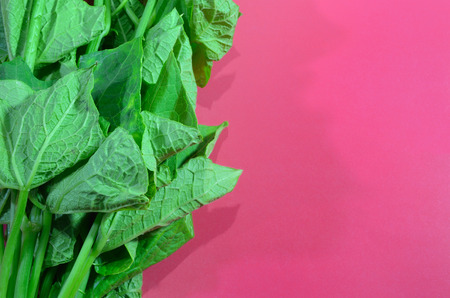 chinese spinach: fresh asian spinach on the left pink paper