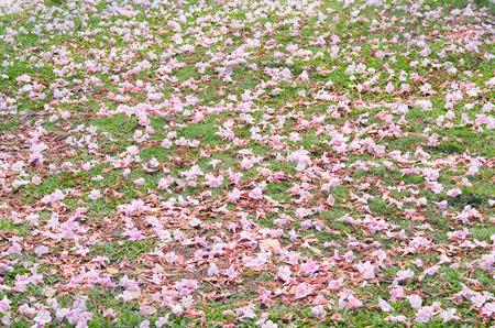 rosa ca�da arbusto trompeta en la hierba