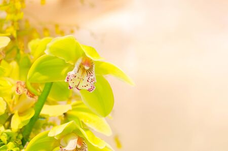close up yellow orchid and blur background 写真素材