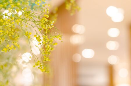 close up yellow little flowers and bokeh background 写真素材