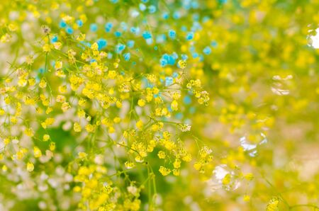 close up yellow and blue little flowers and bokeh background