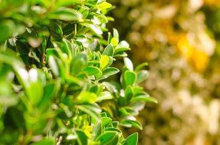 close up green bush and bokeh background 写真素材