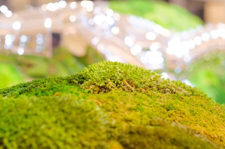 close up green moss and bokeh background