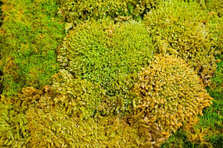 close up green moss background