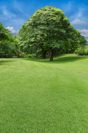 trees and green lawn  in park