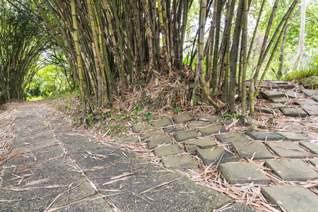 walk path: choice cement block walk path under bamboo grove