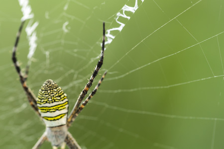 spider legs on the spider web with blur green leaves background