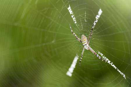 spider on the spider web with blur green leaves background