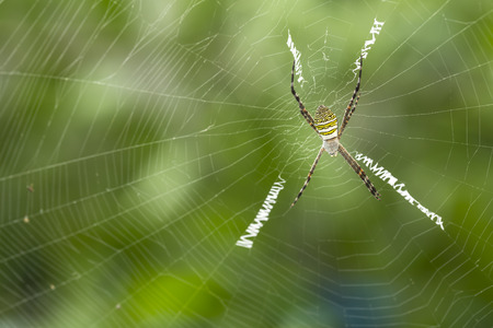 spider on the spider web with bokeh green background Stock Photo