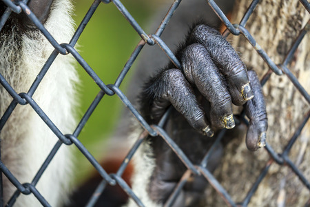 monkey hand on the cage fence