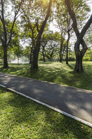 Biking path with shadow of tree branch on green grass and sprinkler spray in the public park