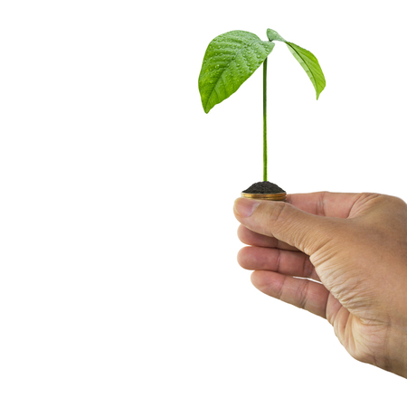 Man hand holding tree growing and soil on money coin isolated on white background Imagens