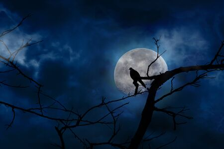 Scary blue background in silhouette of bird perched on tree branches and moon at midnight with bright and dark clouds