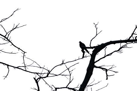 Silhouette of bird perched on tree branches isolated on white background with clipping path Stock Photo