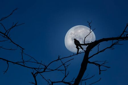 Silhouette of bird perched on tree branches and moon at twilight with clear blue sky background