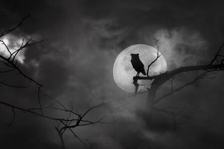 Scary background in silhouette of owl perched on tree branches and moon at midnight with bright and dark clouds