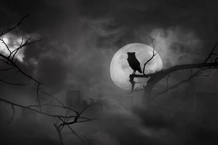 Silhouette of owl perched on tree branches in city abandonment and moon at midnight with bright and dark clouds, concept of scary and horror