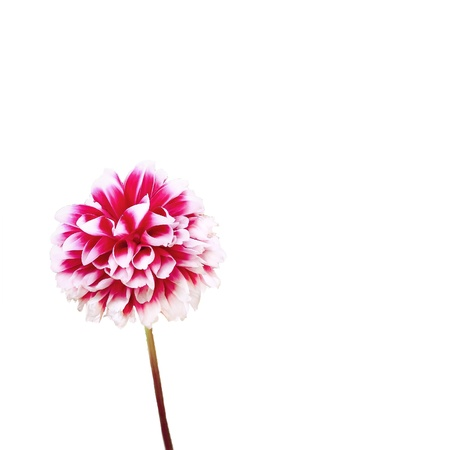 isolated blooming flower