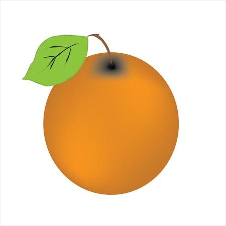 juicy orange  peach isolated on white background