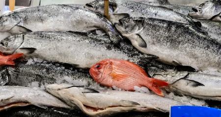 king salmon: Fresh small king salmon on market stand