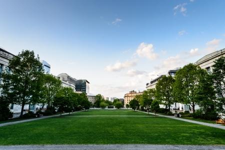 Green field viewed from Harvard Medical School