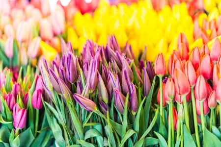 Variety of plants and flowers on street market Stock Photo - 20315584