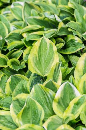 vegatation: big green leaves