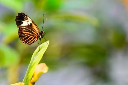 Obrazka motyla