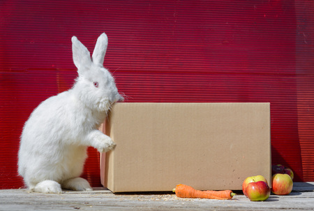 likable: white rabbit sitting on cardboard box on wooden table. A red background.