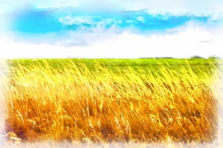 horizon over land: Watercolor drawing dry ears on a background of green grass and blue sky.