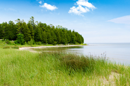 Beautiful coast line with tall grass and trees