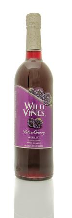 merlot: Winneconne, WI - 19 March 2016:  A bottle of Wild Vines merlot in blackberry flavor