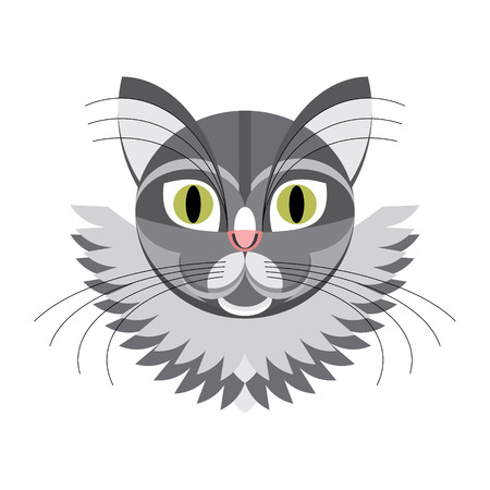 gray cat: Face gray cat