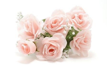 pink roses: Pink roses dropout on white background Stock Photo