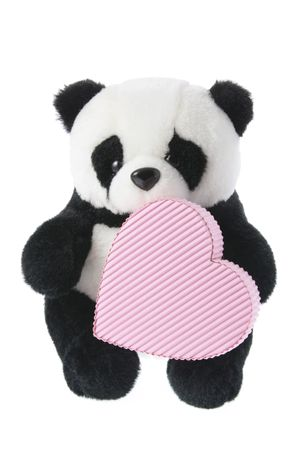 soft toy: Panda Soft Toy with Gift Box
