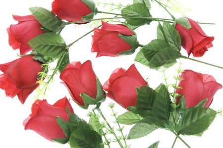 Stalks of Red Roses on White Background photo
