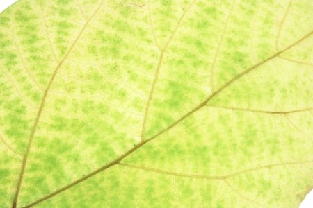 Close Up of Yellow Leaf Stock Photo - 3533594