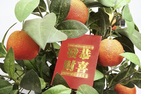 red packet: Close Up of Tangerine Plant with Red Packet Stock Photo