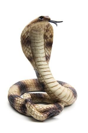 cobra: Cobra sobre fondo blanco  Foto de archivo
