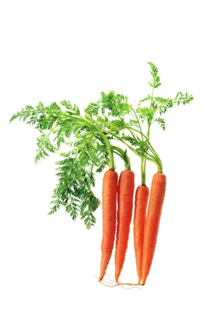 Carrots on White Background photo