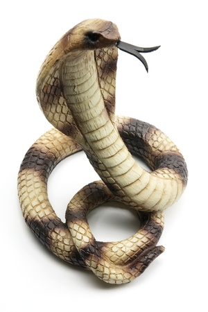 cobra snake: Cobra on White Background Stock Photo