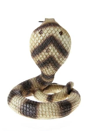 Cobra on White Background photo