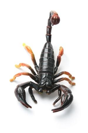 Scorpion on White Background Stock Photo - 9024746