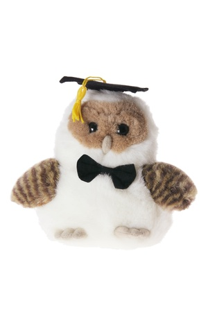 Graduating Owl on White Background photo