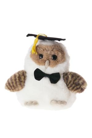 Graduating Owl on White Background photo