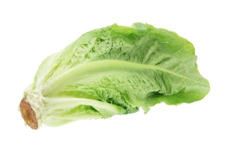 Cos Lettuce on White Background Stock Photo - 9267371
