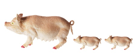 sow: Sow and Piglets on White Background Stock Photo
