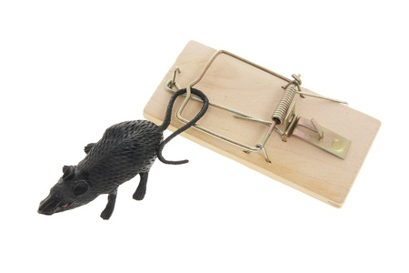 mousetrap: Toy Rat and Mousetrap on White Background