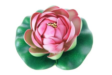 nelumbinis: Lotus Flower on White Background