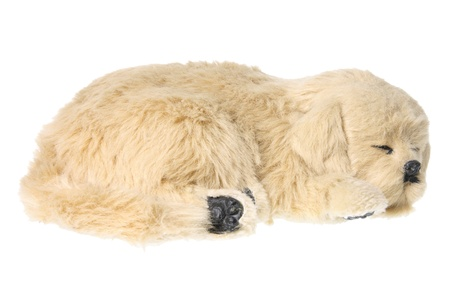 soft toy: Dog Soft Toy on White Background